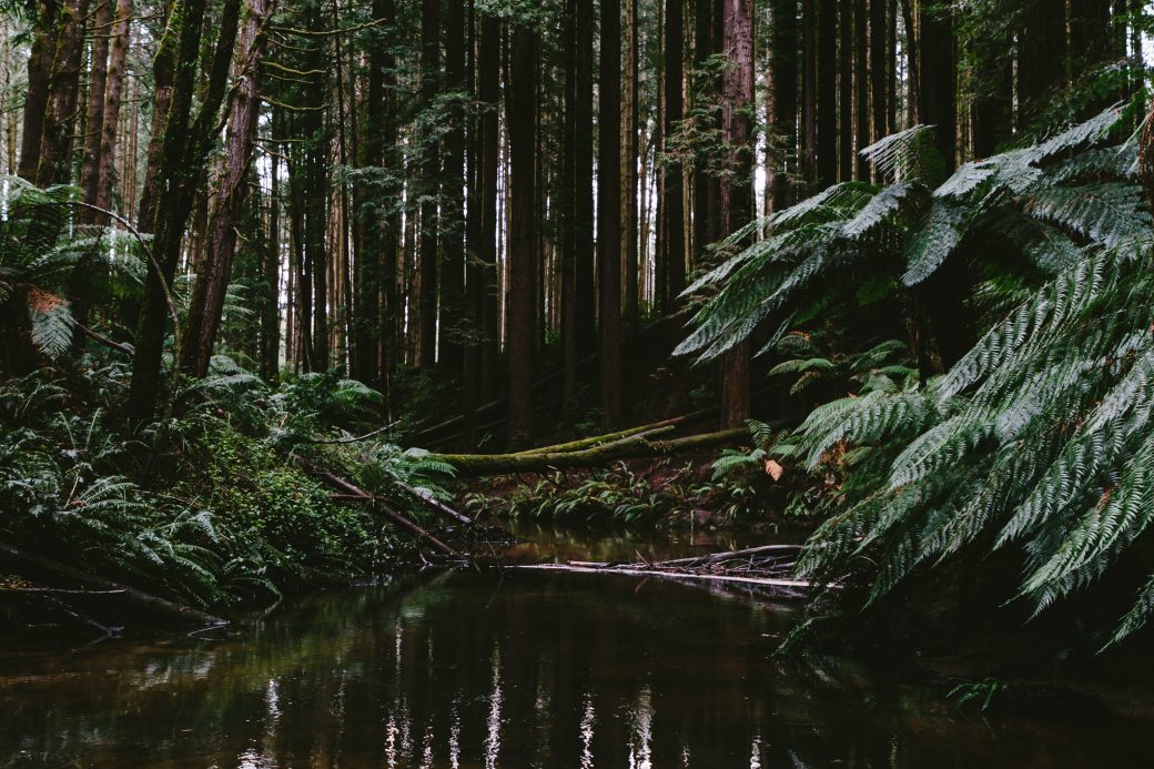 The great Otway National Park