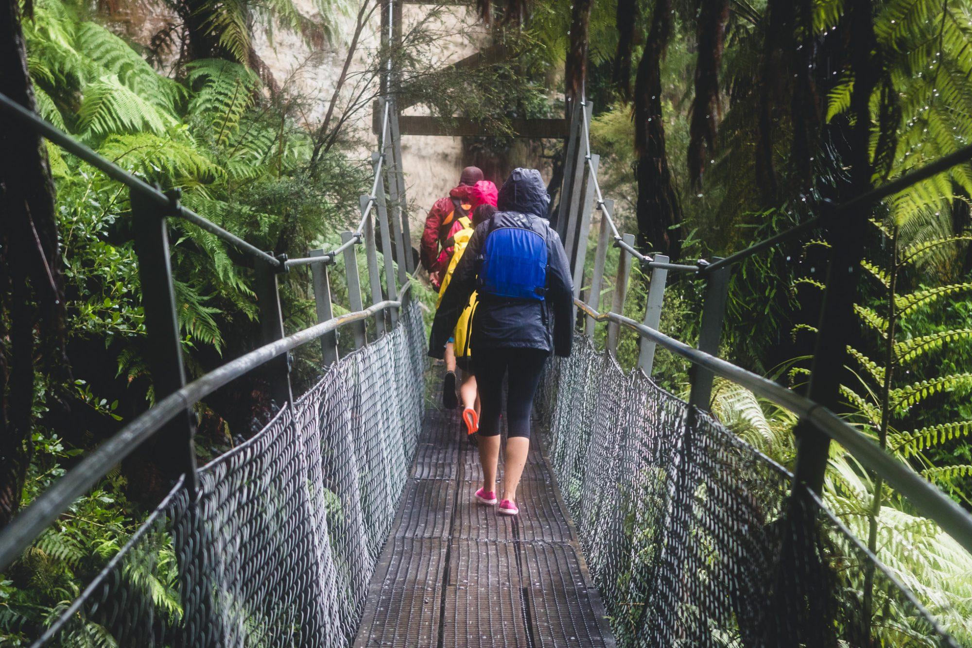 Canoe Safaris Whangarei Falls Pipiriki River