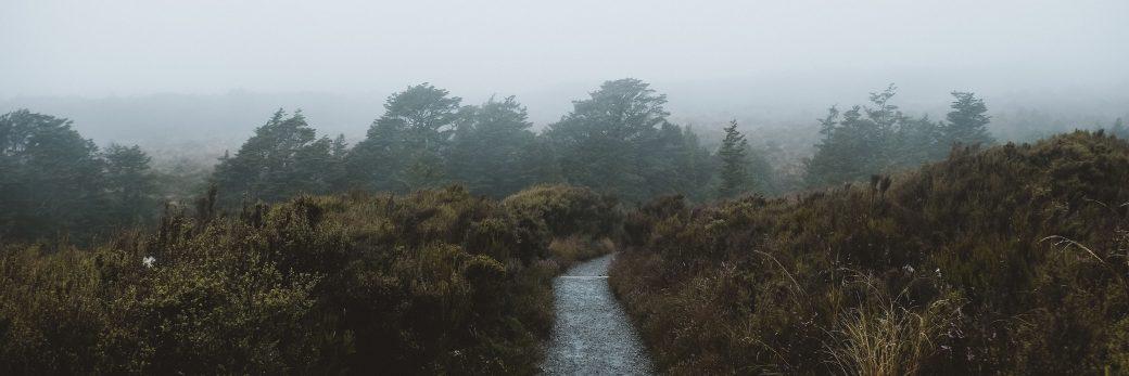 Breaking Cameras in the Rain: Taranaki Falls + Whanganui, Ruapehu