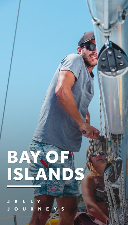 Bay of Islands: Wild Dolphins in New Zealand — Seeing wild dolphins in New Zealand with Vigilant Yacht Charters around the Bay of Islands; plus where to stay in Auckland and Paihia. — Jelly Journeys